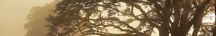 Trees_image_2